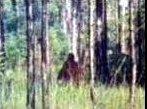 Bigfoot taken in Florida Everglades