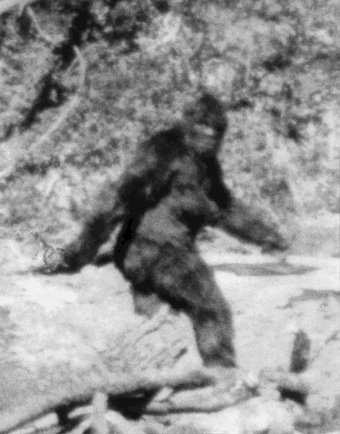 Patterson & Gimlin's Bigfoot Photo
