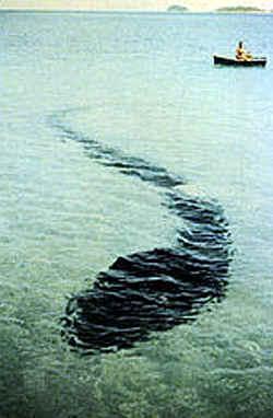 A Sea Serpent