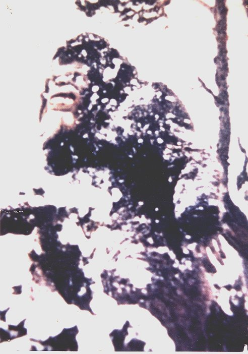 Photograph of Bigfoot taken in the 70's