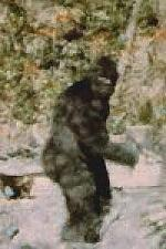 Patterson & Gimlin's Bigfoot Photo in Color